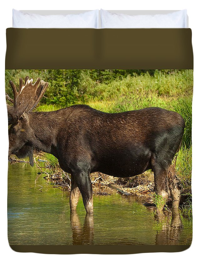 Bull Moose Duvet Cover featuring the photograph Moose by Sebastian Musial