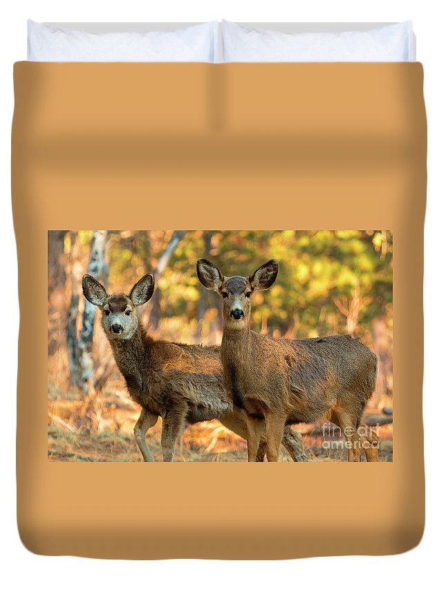 Deer Duvet Cover featuring the photograph Mule Deer In The Woods by Steve Krull