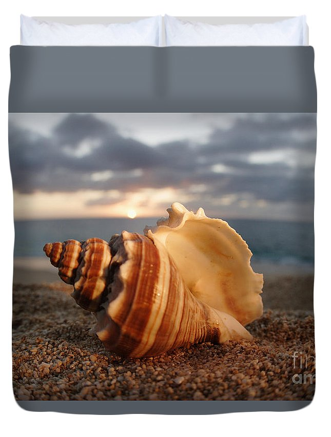 Background Duvet Cover featuring the photograph North Shore Seashell by Vince Cavataio - Printscapes
