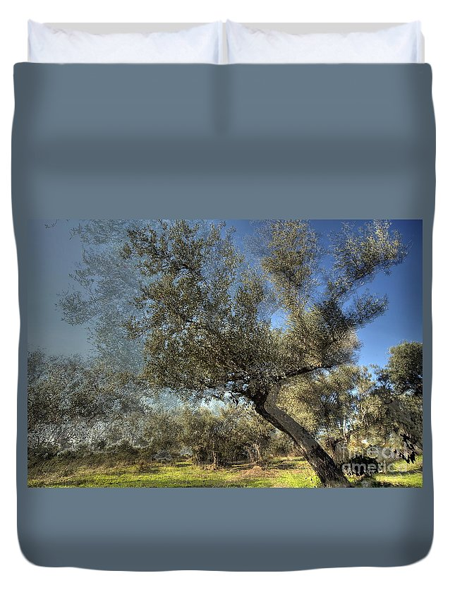 Olive Duvet Cover featuring the photograph Olive Trees by Vladi Alon
