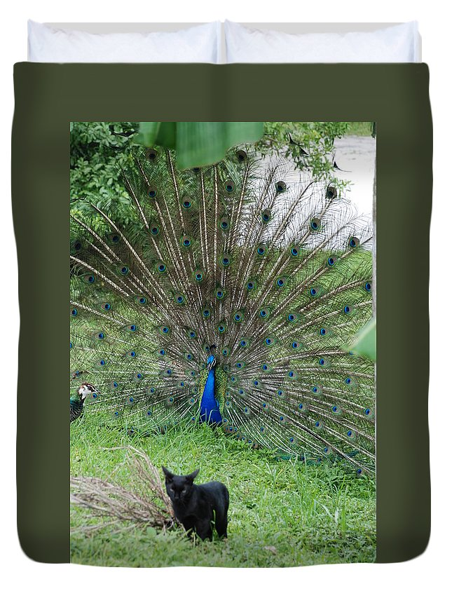 Animals Duvet Cover featuring the photograph 2 Peacocks And A Black Pussy Cat by Rob Hans