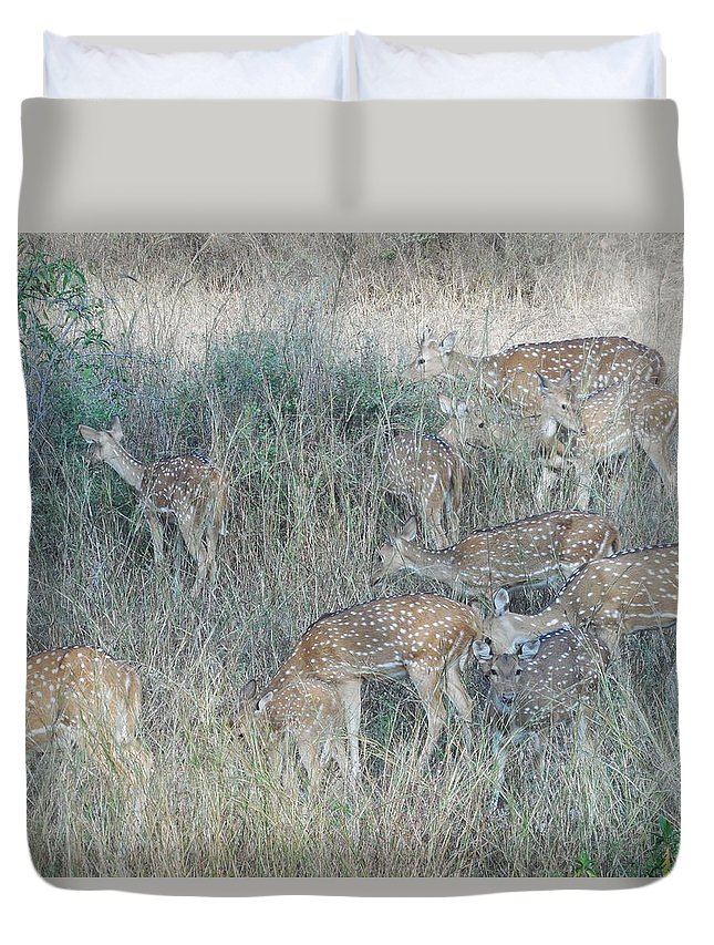 Spotted Deer Duvet Cover featuring the photograph Photograph by Sannu Prasad