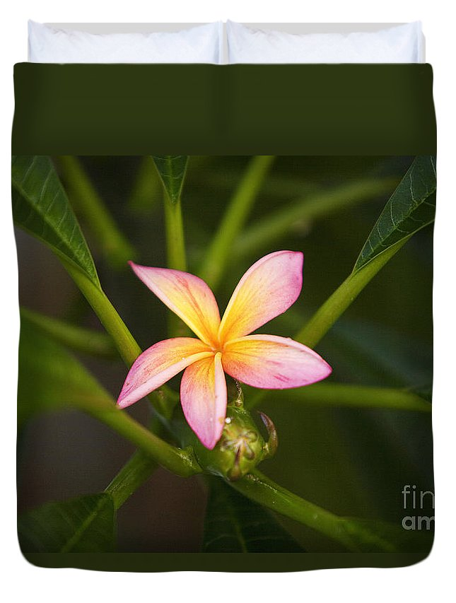 Afternoon Duvet Cover featuring the photograph Plumeria Blossom by Ron Dahlquist - Printscapes