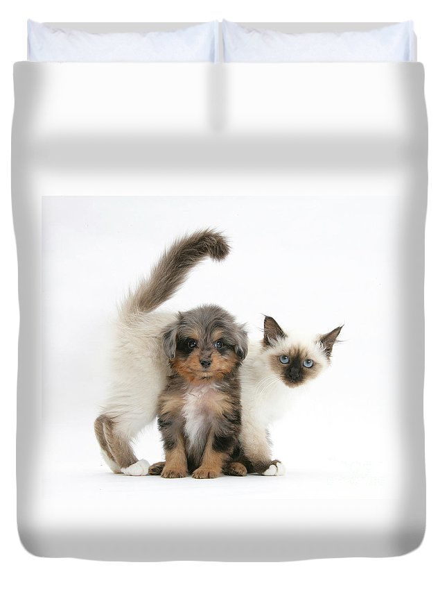 Animal Duvet Cover featuring the photograph Puppy And Kitten by Mark Taylor