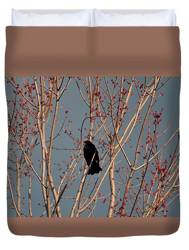 Blackbird Duvet Cover featuring the photograph Red-winged Blackbird by Linda Crockett