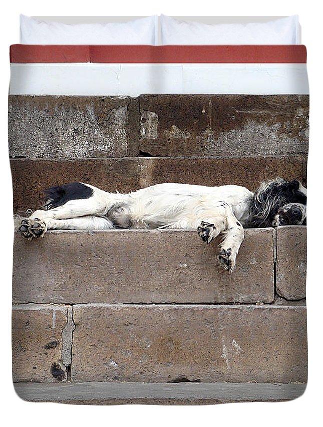 Karen Zuk Rosenblatt Art And Photography Duvet Cover featuring the photograph Street Dog Sleeping On Steps by Karen Zuk Rosenblatt