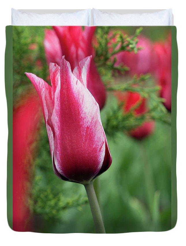 Tulip Duvet Cover featuring the photograph Tulip by Galia Nikolaeva