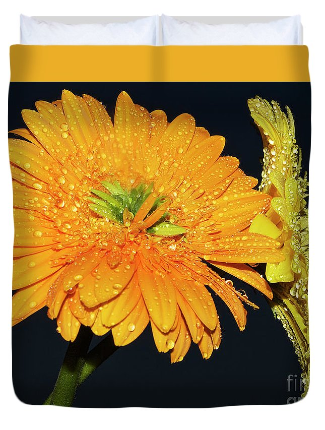 Flowers Duvet Cover featuring the photograph Two Gerbers by Elvira Ladocki