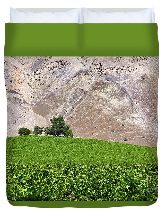 Chile Duvet Cover featuring the photograph Vines Contrasting With Chiles Atacama Desert by James Brunker
