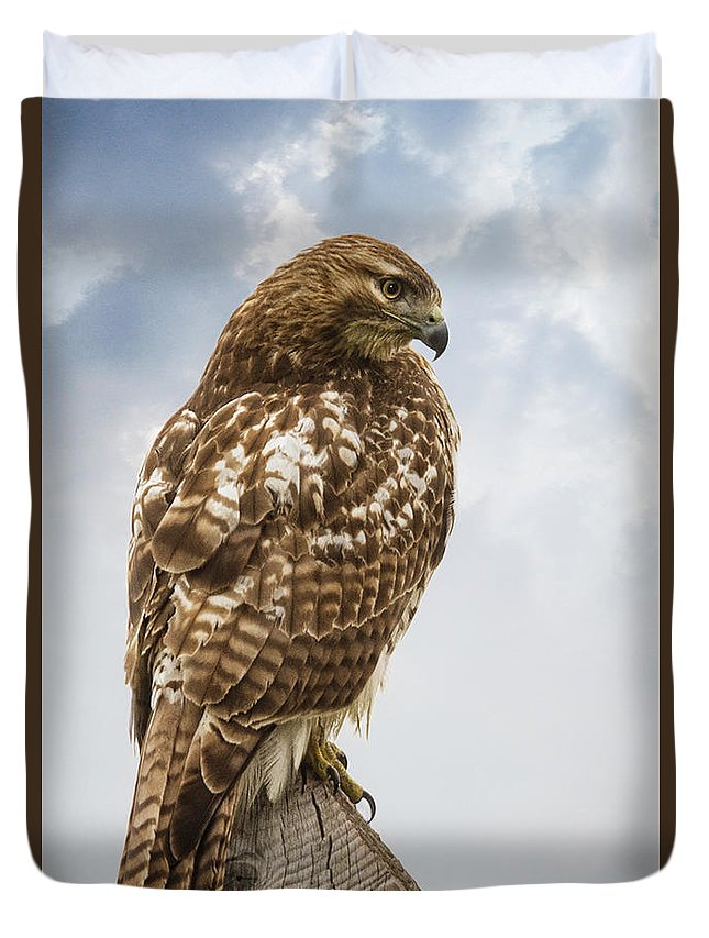 Red Hawk Duvet Cover featuring the digital art Watching by Anita Hubbard