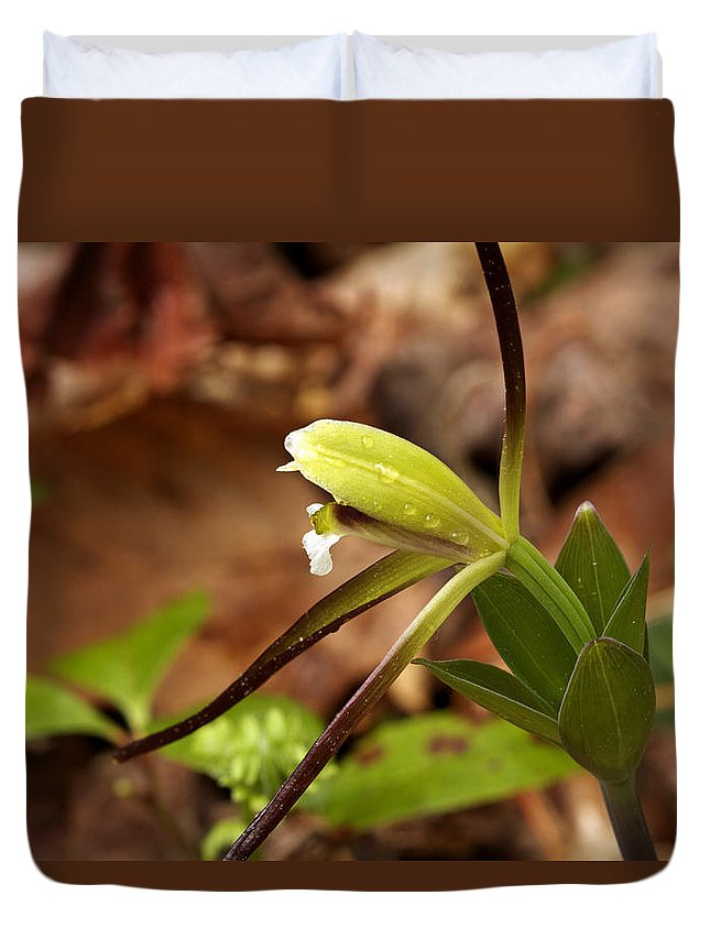 Flower Duvet Cover featuring the photograph Whorled Pogonia by Jack R Perry