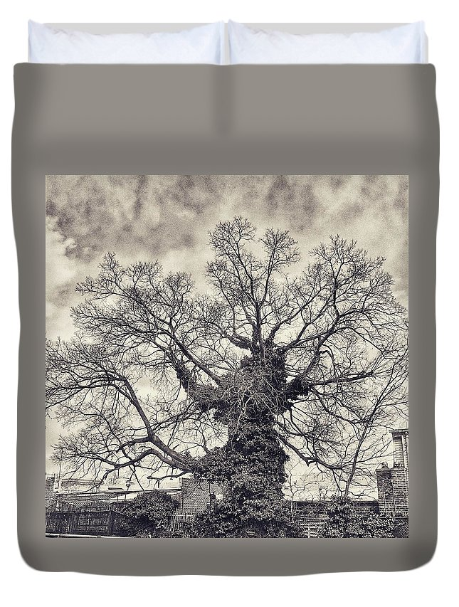 Tree Duvet Cover featuring the photograph Winter by Robert Villano