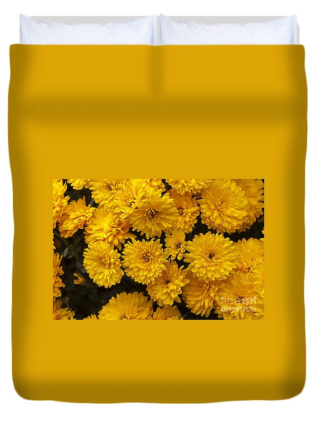 Flowers Duvet Cover featuring the photograph Yellow Chrysanthemums by Louise Heusinkveld