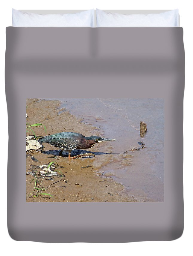 Birds Duvet Cover featuring the photograph 2013-baby Green Heron by Martha Abell