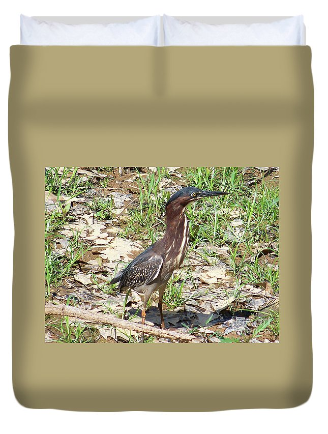 Birds Duvet Cover featuring the photograph 2014-baby Green Heron by Martha Abell