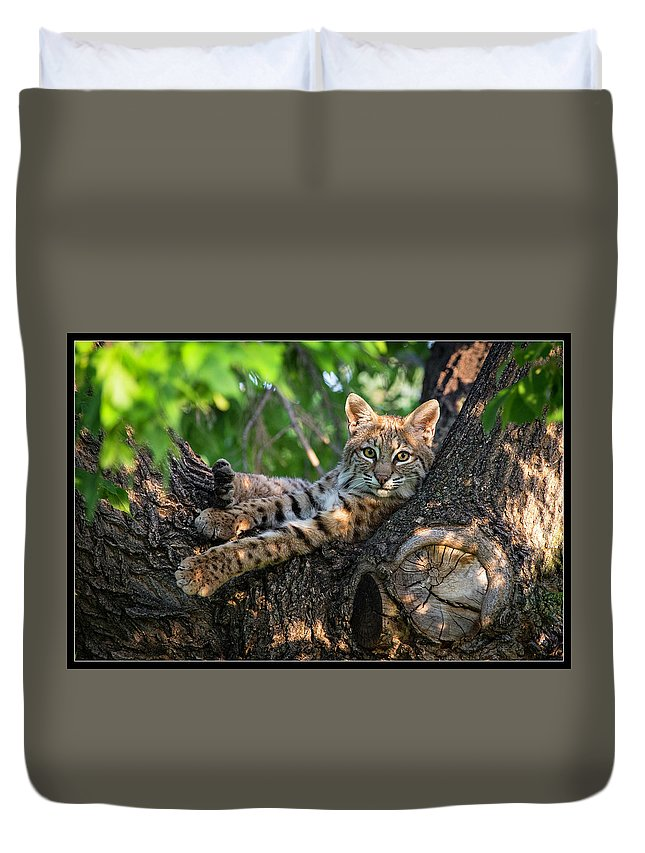 Duvet Cover featuring the photograph In A Lurch - Bobcat 8 by J and j Imagery