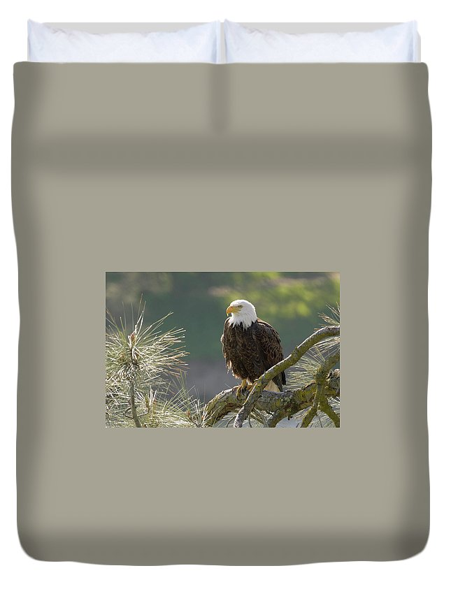 Birds Duvet Cover featuring the photograph Bald Eagle by Doug Herr