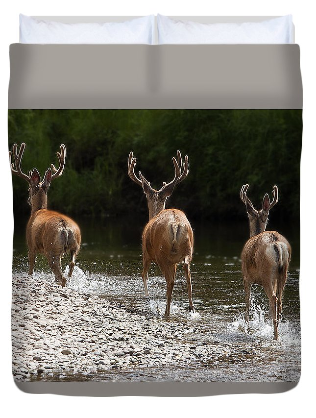 Wildlife Duvet Cover featuring the photograph 3 Bucks by Russell Smith