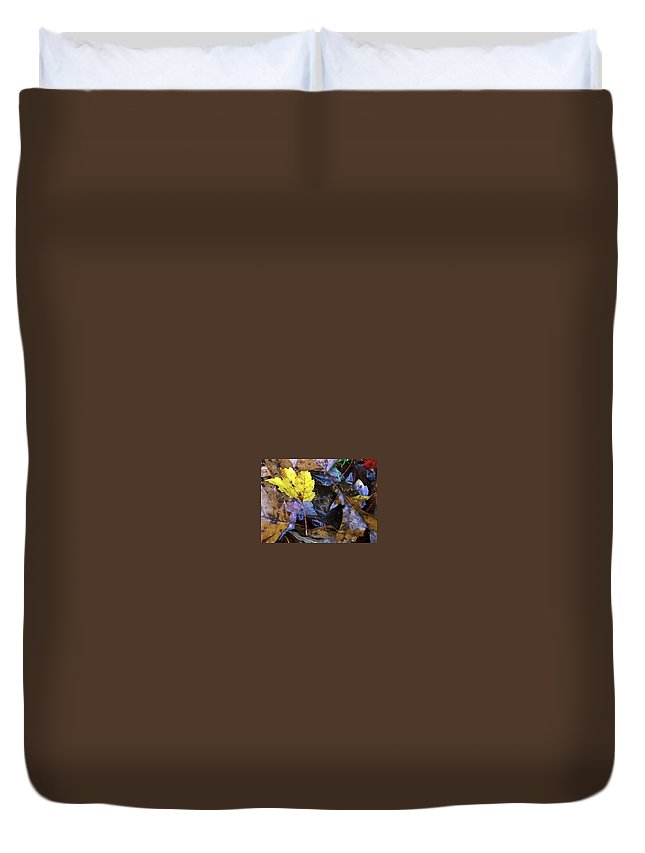 Fall Color Leaf Duvet Cover featuring the photograph Colors Of The Fall by Wolfgang Schweizer