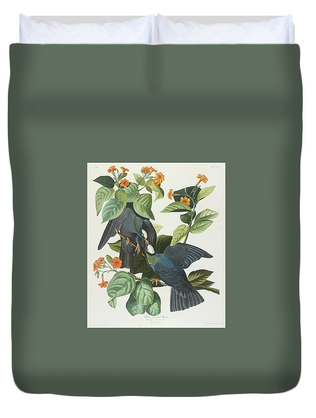 John James Audubon (after) White-crowned Pigeon (plate Clxxvii) Duvet Cover featuring the painting Crowned Pigeon by John James