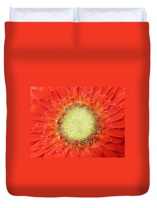 Gerbera Duvet Cover featuring the photograph Gerbera by Daniel Csoka