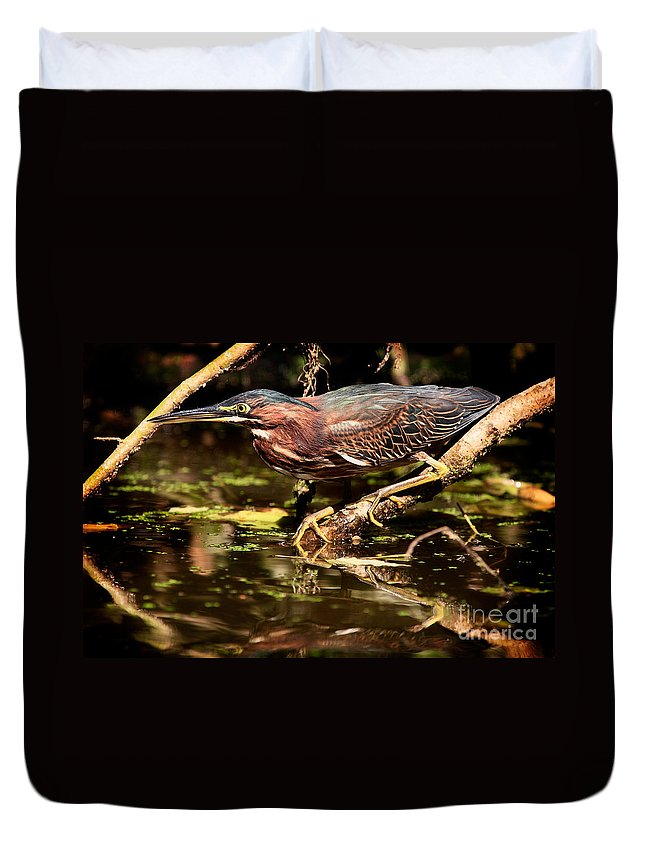 Green Heron Duvet Cover featuring the photograph Green Heron by Matt Suess