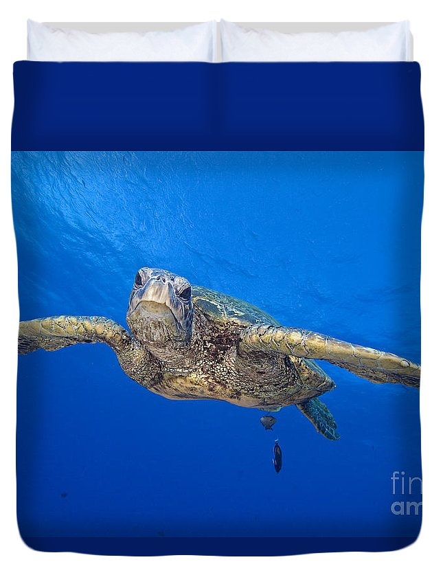 Animal Art Duvet Cover featuring the photograph Hawaii, Green Sea Turtle by Dave Fleetham - Printscapes