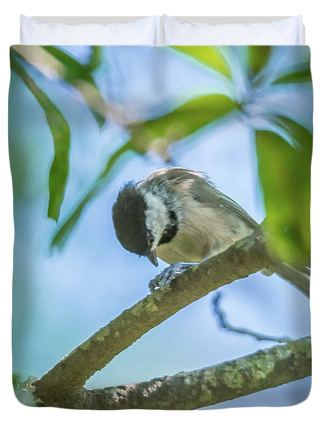 Nature Duvet Cover featuring the photograph Huthatch Bird Nut Pecker In The Wild On A Tree by Alex Grichenko