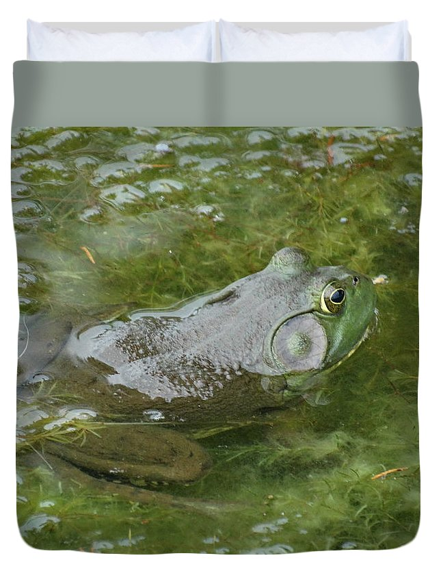 Frog Duvet Cover featuring the photograph I'm Hungry by Greg Boutz