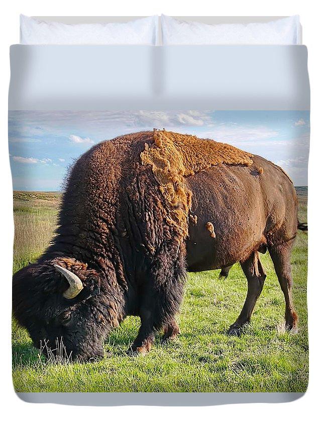 Buffalo Duvet Cover featuring the photograph Kansas Buffalo by Alan Hutchins