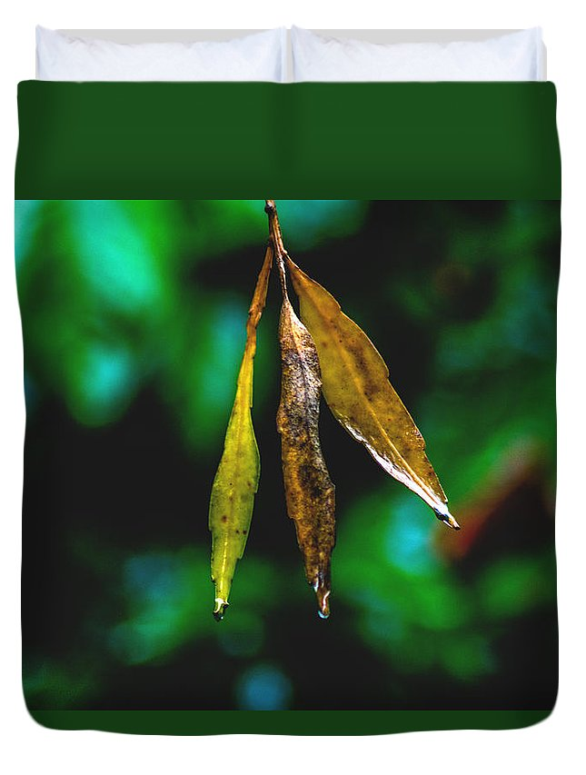 Leaves Duvet Cover featuring the photograph 3 Leaves by Totto Ponce