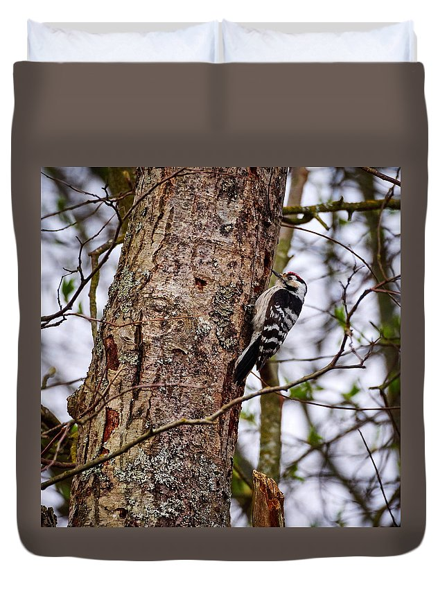 Finland Duvet Cover featuring the photograph Lesser Spotted Woodpecker by Jouko Lehto