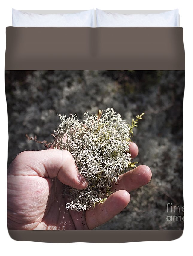 Lichen Duvet Cover featuring the photograph Lichen by D R