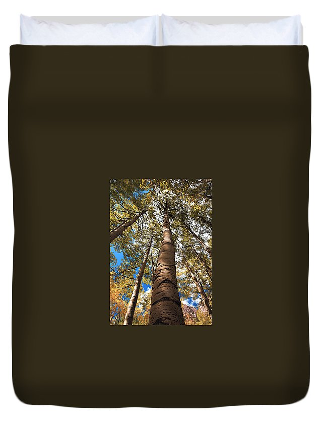 Americana Duvet Cover featuring the photograph Looking Up by Marilyn Hunt