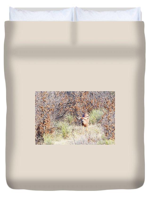 Animal Duvet Cover featuring the photograph Mule Deer Doe by Steve Krull
