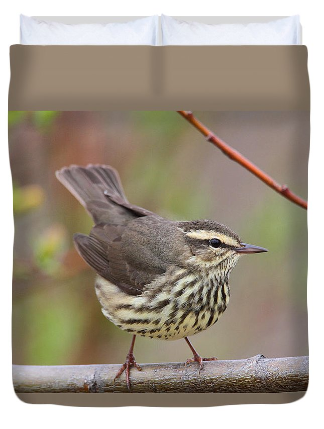 Doug Lloyd Duvet Cover featuring the photograph Northern Waterthrush by Doug Lloyd