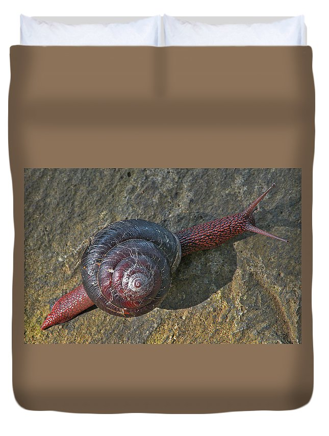 Snail Duvet Cover featuring the photograph Oregon Snail by Lindy Pollard