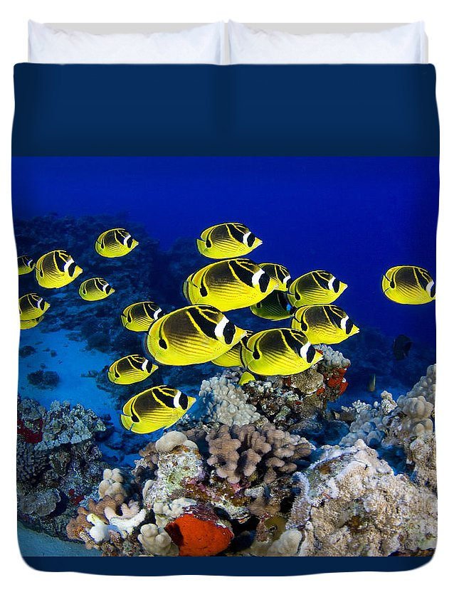 Animal Art Duvet Cover featuring the photograph Racoon Butterflyfish by Dave Fleetham - Printscapes
