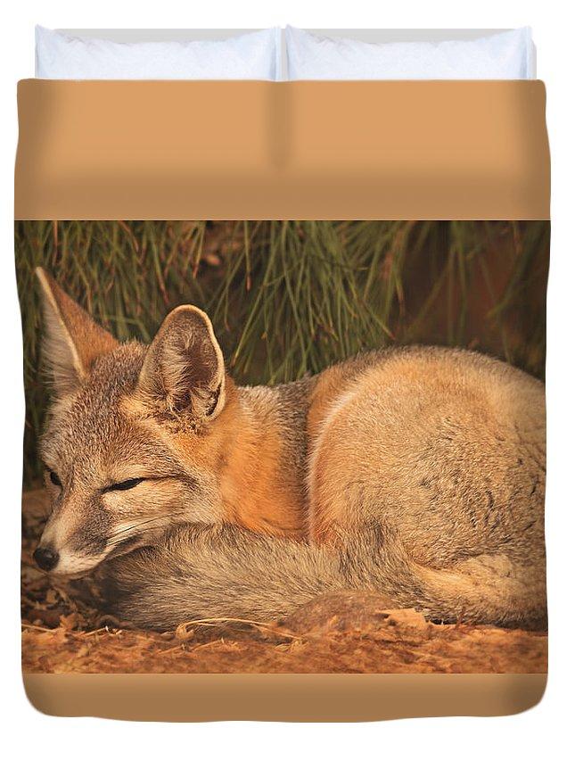 Animal Duvet Cover featuring the photograph San Joaquin Kit Fox by Brian Cross