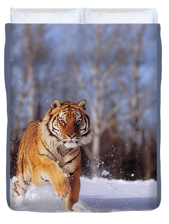 Afternoon Duvet Cover featuring the photograph Siberian Tiger by John Hyde - Printscapes