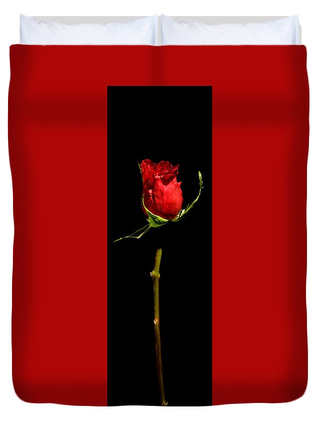 Scent Duvet Cover featuring the photograph Single Rose by Avril Christophe