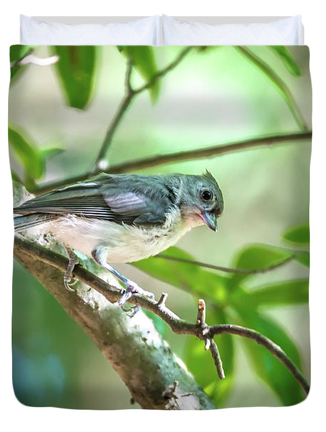 Titmouse Duvet Cover featuring the photograph Tufted Titmouse In The Wilds Of South Carolina by Alex Grichenko