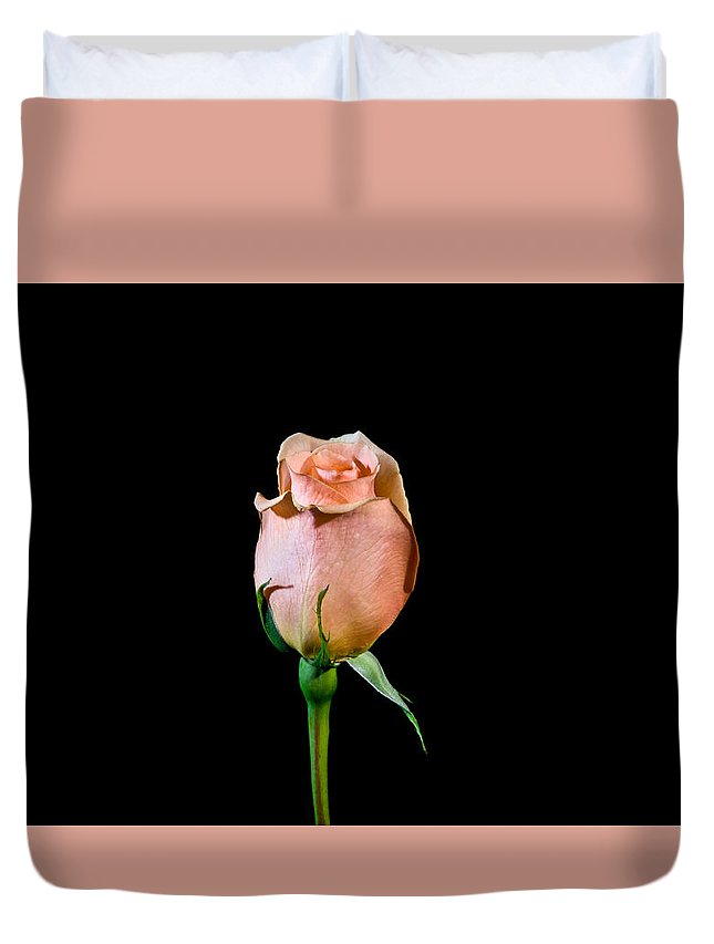 Old Duvet Cover featuring the photograph Single Rose by Avril Christophe