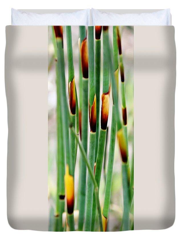 Close Up; Decorative; Bamboo; Grass; Green; Brown; Plant; Garden; Background; Werner Lehmann; Duvet Cover featuring the photograph Bamboo Grass by Werner Lehmann