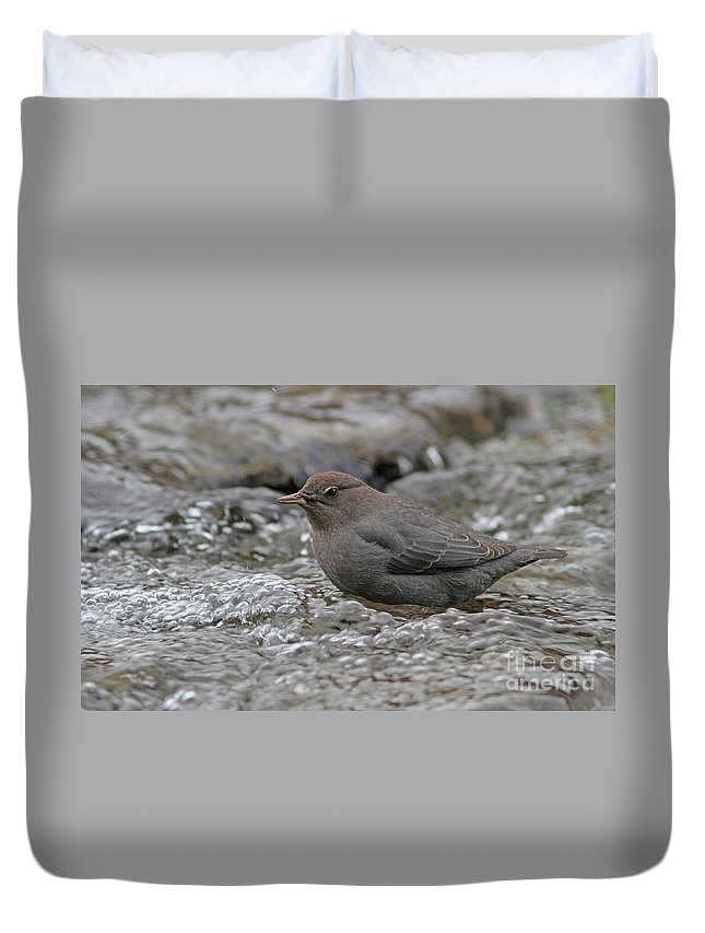 American Dipper Duvet Cover featuring the photograph American Dipper by Gary Wing