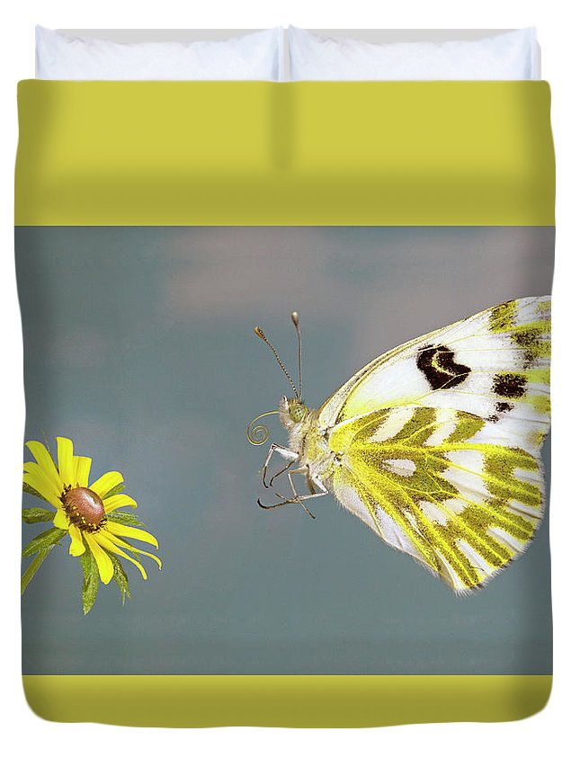 Becker's; White; Butterfly; Pontia; Beckerii; Great; Beasin; White; Sagebrush; White; Probiscis; Feeding Tube; Nectar; Pollen; Nature; Outdoors; Garden; Tranquil; Feeding; Eating Duvet Cover featuring the photograph Becker's White Butterfly by Buddy Mays