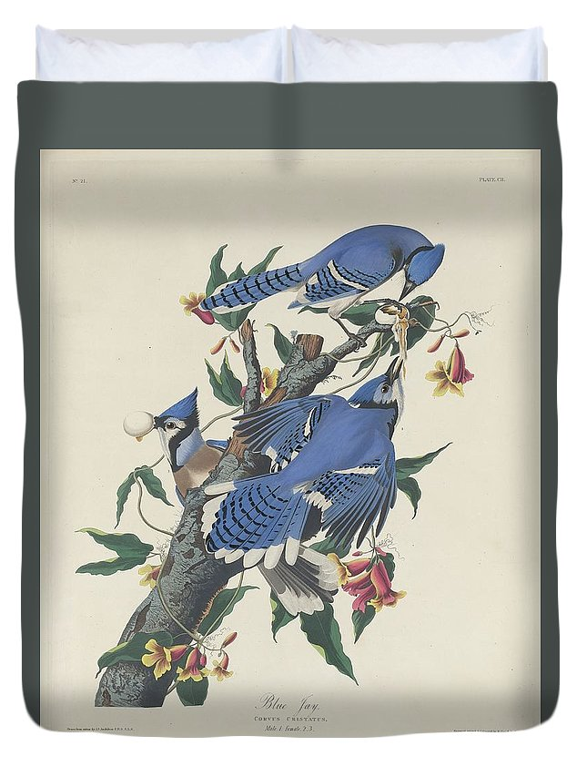 Audubon Duvet Cover featuring the drawing Blue Jay by Dreyer Wildlife Print Collections