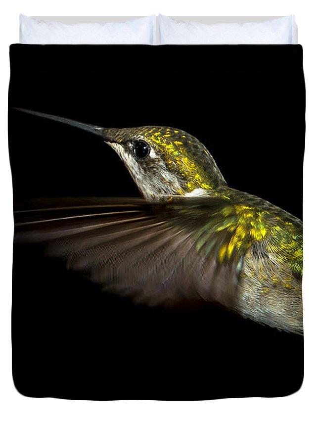 Female Ruby-throated Hummingbird Duvet Cover featuring the photograph Female Ruby-throated Hummingbird by Robert L Jackson