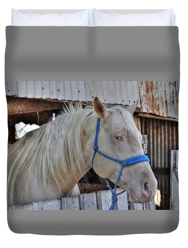 Horse Duvet Cover featuring the photograph Horse by Savannah Gibbs