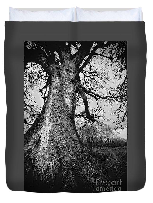 Tree Duvet Cover featuring the photograph Old Tree by Ulisse Bart